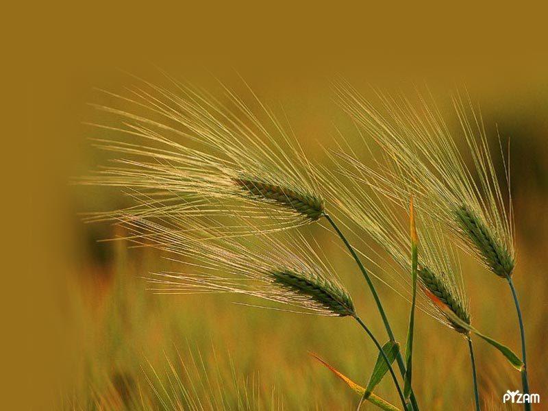 bible-study-grasses2